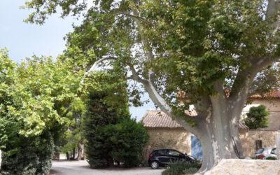 Die Provence von Aprikosen bis Ziegenkäse