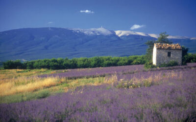 """Der Mont Ventoux –  """"Le Géant de Provence"""""""
