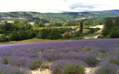 Die Provence – eine Region mit bewegter Geschichte und spannender Gegenwart